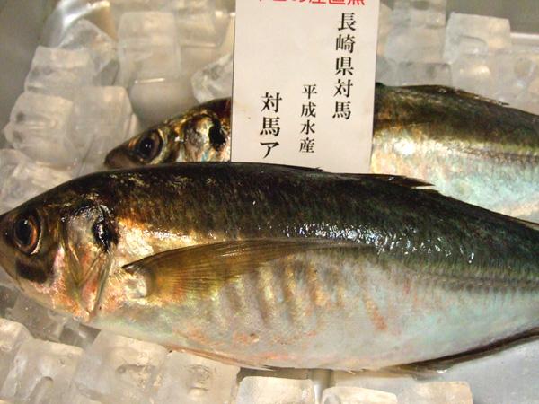 DSCF0463sakana5.jpg
