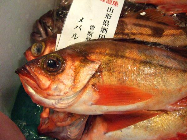DSCF0467sakana10.jpg